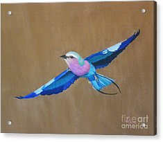 Violet-breasted Roller Bird II Acrylic Print