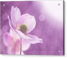 Acrylic Print featuring the photograph Violet Breeze 4x3 by Lisa Knechtel