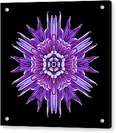 Violet Chrysanthemum Iv Flower Mandala Acrylic Print by David J Bookbinder