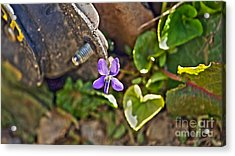 Violet In The Rust Acrylic Print by Crystal Harman