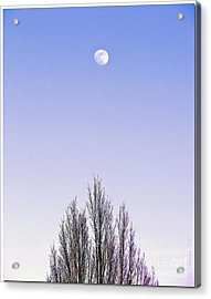 Acrylic Print featuring the photograph Violet Moon And Treetop by Chris Anderson