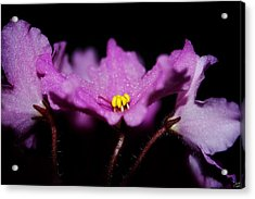 Violet Prayers Acrylic Print by Lisa Knechtel
