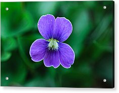 Acrylic Print featuring the photograph Violet Splendor by Julie Andel