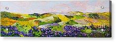 Violet Sunrise Acrylic Print by Allan P Friedlander