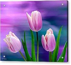 Violet Tulips Acrylic Print by John Pagliuca