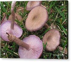 Violet Waxcaps Acrylic Print