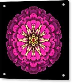 Violet Zinnia Elegans Flower Mandala Acrylic Print by David J Bookbinder