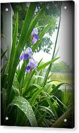 Acrylic Print featuring the photograph Iris With Dew by Laurie Perry