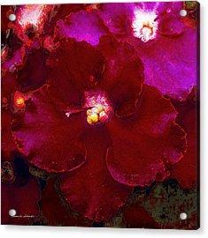 Violets No. 3 Acrylic Print
