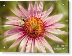 Vip Very Important Pollinator Acrylic Print