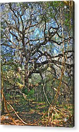 Virgin Forest Acrylic Print by Cyril Maza