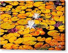 Virginia Lilies Acrylic Print