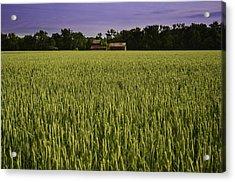 Virginia Wheat Field Acrylic Print