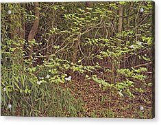 Virginia Woods Photo Acrylic Print by Peter J Sucy