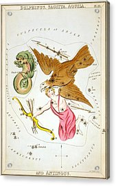 Delphinus Sagitta Aquila Antinous Acrylic Print by Celestial Images