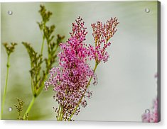 Vision In Pink Acrylic Print by Alan Marlowe
