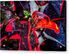 Visions Of Red Acrylic Print