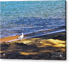 Visitor - Lake Tahoe Acrylic Print