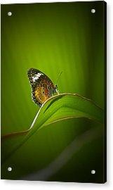 Visitor Acrylic Print by Randy Pollard
