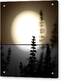 Acrylic Print featuring the photograph Vitex Moon by Charlotte Schafer