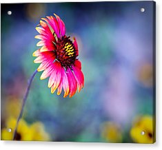 Vivid Colors Acrylic Print by Tammy Smith