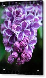 Vivid Lilac Acrylic Print