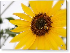 Acrylic Print featuring the photograph Vivid Sunflower With Bee Fine Art Nature Photography  by Jerry Cowart