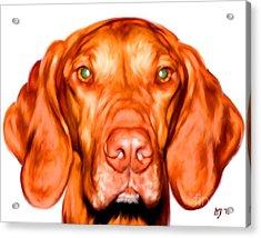 Vizsla Dog Art Portrait Acrylic Print by Iain McDonald