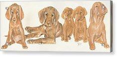 Vizsla Puppies Acrylic Print