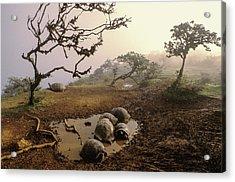 Volcan Alcedo Giant Tortoises Wallowing Acrylic Print