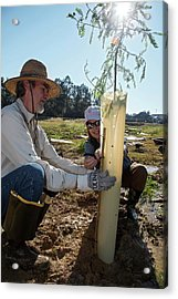 Volunteers Planting Trees Acrylic Print by Jim West