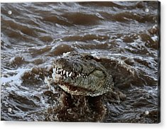 Voracious Crocodile In Water Acrylic Print