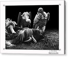Vulture Acrylic Print by Christine Sponchia