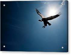 Vulture Flying In Front Of The Sun Acrylic Print by Johan Swanepoel