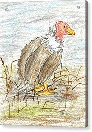 Vulture Acrylic Print by Ethan Chaupiz