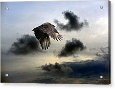 Vulture Sky Acrylic Print