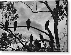 Vultures And Cloudy Sky Bw Acrylic Print by Dave Gordon