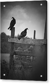 Acrylic Print featuring the photograph Vultures On Fence by Bradley R Youngberg