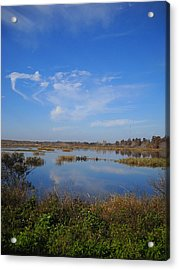 Wading Bird Way 001 Acrylic Print