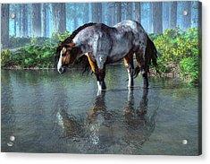 Wading Horse Acrylic Print by Daniel Eskridge
