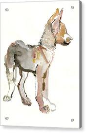 Waggle Arabian Wolf Pup Acrylic Print