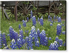 Wagon With Bluebonnets Acrylic Print