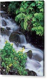 Wahkeena Creek Spring Acrylic Print