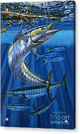 Wahoo Rip Off0047 Acrylic Print by Carey Chen