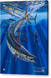 Wahoo Spear Acrylic Print by Carey Chen