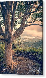 Waihee Ridge Trail Maui Hawaii Acrylic Print by Edward Fielding