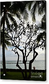 Waikiki Beach Hawaii Acrylic Print by Eva Kaufman