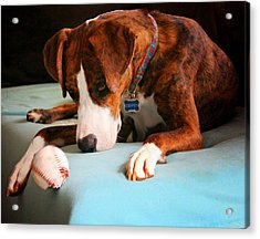 Acrylic Print featuring the photograph Wait For It      Wait For It by Robert McCubbin