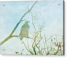 Waiting Eagle Acrylic Print by Georgia Fowler