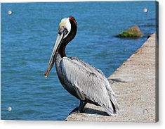 Acrylic Print featuring the photograph Waiting For A Fish  by Christy Pooschke